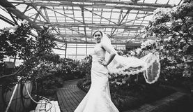 Bride with long veil standing at greenhouse Stock Image
