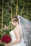 Bride with long veil standing by rose garden. A side profile of a bride standing by a rose garden holding a bouquet of red roses Royalty Free Stock Photography