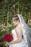 Bride with long veil standing by rose garden. A side profile of a bride standing by a rose garden holding a bouquet of red roses Stock Photo