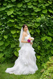 Bride in nature Stock Photography