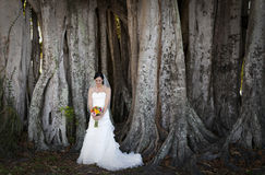 Bride outdoors Royalty Free Stock Image