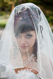 Bride in the park. Attractive bride looks through wedding veil Stock Photography