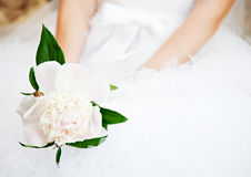 Bride with peony in hands Stock Images