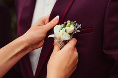 Bride pins white boutonniere to groom& x27;s wine jacket Stock Photos