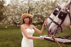 Bride playing with white horses Royalty Free Stock Photos
