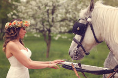 Bride playing with white horses Royalty Free Stock Image