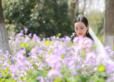 Bride portraint with white wedding dress in Orychophragmus violaceus flower field. A Chinese Bride with white wedding dress in Orychophragmus violaceus flower Stock Photo