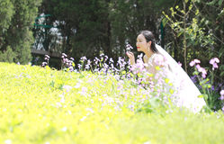 Bride portraint with white wedding dress in Orychophragmus violaceus flower field. A Chinese Bride with white wedding dress in Orychophragmus violaceus flower Stock Photography