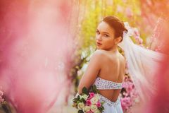 Bride portrait over pink cherry trees outdoor Stock Photography
