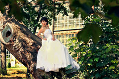 Bride poses on a tree in the garden Stock Images
