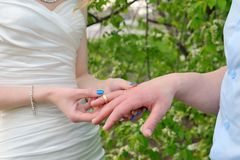 Bride puts a wedding ring on groom's finger Stock Image