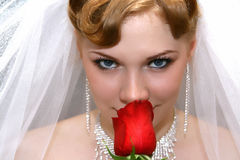 Bride with a rose. Beautiful bride with red rose Royalty Free Stock Image