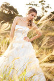 Bride in a Rural Landscape Stock Image