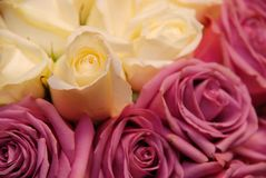 Bride's Bouquet. A close up shot of a brides bouquet of roses royalty free stock photo