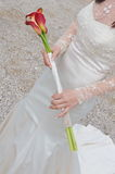 Bride's bouquet, Royalty Free Stock Photos