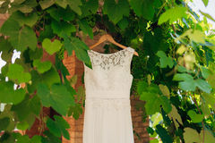 The bride`s dress on a hanger in the green Stock Photos