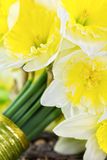 Bride's narcissus bouquet side view closeup Stock Image