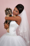 Bride's portrait with a Yorkshire terrier in studio Stock Image