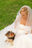 Bride sitting and dog sitting on dress Stock Images