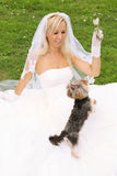 Bride sitting on grass and play with dog Royalty Free Stock Image