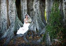 Bride sitting under tree Stock Photos