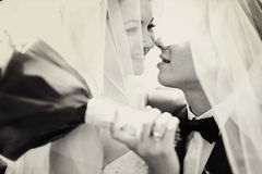 Bride smiles while groom tries to kiss her standing under a veil Royalty Free Stock Photo