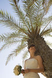 A bride standing in the shade of a palm tree Stock Photo