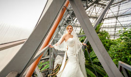Bride standing under roof at greenhouse Stock Images