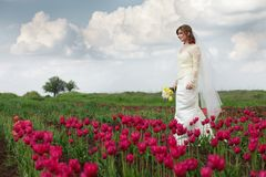 Bride in tulips field Royalty Free Stock Photography