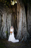 Bride under tree Stock Photography