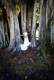 Bride under tree Stock Photo