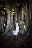 Bride under tree Stock Images