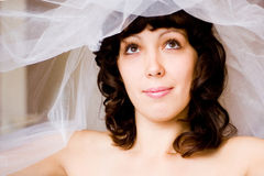 Bride under veil. Young bride with pretty face looks up from under her veil Stock Image