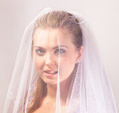 Bride with the veil. Young beautiful bride with the veil Stock Images