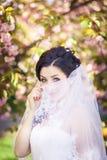 Bride, veil, trees, flowering Stock Images