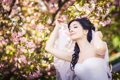 Bride, veil, trees, flowering Stock Photos