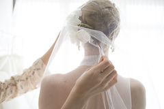 Bride wearing a veil Royalty Free Stock Photo