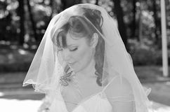 Bride wearing white veil. Bride with veil over her face Royalty Free Stock Images