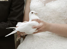Bride with white dove Royalty Free Stock Images