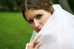 The bride in a white dress Stock Photography