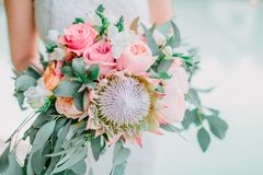 Bride in white dress and hold a wedding pink bouquet with proteus. Wedding day Royalty Free Stock Photo