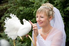 Bride and white pigeon Stock Photography