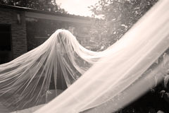 Bride with white veil. Bride with a long veil in the garden Royalty Free Stock Photography