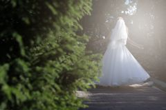 Bride doing pirouette in the park. Bride with white wedding dress doing a pirouette in the park, green alley Royalty Free Stock Image