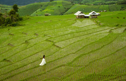 Bride with white wedding dress in paddy field. Bride with white wedding dress in picturesque green terraced rice field in Pa Pong Pieng, Mae Chaem, Chiang Mai Royalty Free Stock Photos