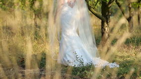 Bride in white wedding dress walking into apple trees.  stock footage