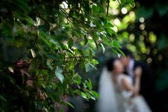 The bridegroom is kissing the bride. By have leaves are the foreground. Stock Images
