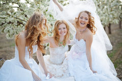 Brides royalty free stock images