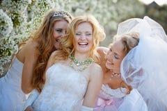 Brides Stock Photo
