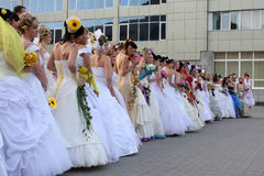 Brides. Greater group of beautiful happy brides Royalty Free Stock Photos